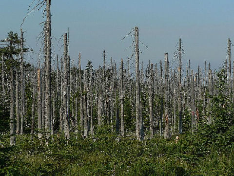 pollution effects, sulfur pollution, trees