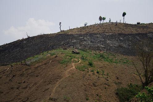 air pollution causes, deforestation burma
