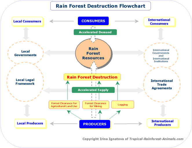 rain forest destruction flowchart